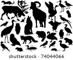 Stock vector illustration with polar animals collection isolated on white background 74044066