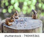 Three Squirrels. The Squirrels...