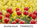 amazing darwin hybrid red tulip ... | Shutterstock . vector #740606251
