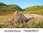 field of buckwheat flowers at... | Shutterstock . vector #740609857