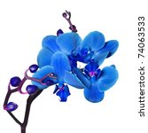 Blue Orchid Isolated On White...
