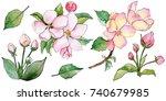 wildflower flowers of apple... | Shutterstock . vector #740679985