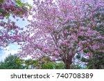 pink cherry blossom  pink... | Shutterstock . vector #740708389