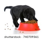 Stock photo black labrador retriever puppy eating kibble out of a red dog food dish on white background 740709361