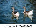 gooses in a flock   Shutterstock . vector #740737471