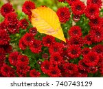 yellow fallen leaf on red fall... | Shutterstock . vector #740743129