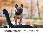 french bulldog dog posing on a... | Shutterstock . vector #740746879