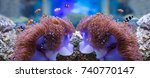 sea anemone and anemone fish | Shutterstock . vector #740770147