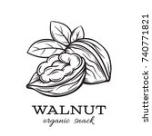 vector hand drawn walnut for... | Shutterstock .eps vector #740771821