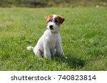 puppy jack russell terrier | Shutterstock . vector #740823814