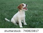 puppy jack russell terrier | Shutterstock . vector #740823817
