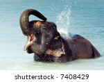 Cute Asian Elephant Splashing...