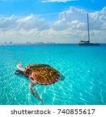 Turtles Photomount Caribbean Isla Mujeres - Fine Art prints
