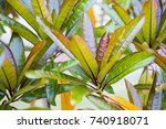 Colorful Strong Healthy Leaves...