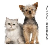 Stock photo yorkshire terrier years old and a persian cat in front of white background 74094742