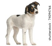 mixed breed puppy  2 and a half ... | Shutterstock . vector #74094766