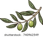 olive branch with detachable... | Shutterstock .eps vector #740962549