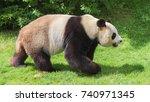 giant panda  bear panda walking ... | Shutterstock . vector #740971345