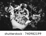lilac in her hands on grass | Shutterstock . vector #740982199