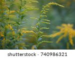 yellow wildflowers background ... | Shutterstock . vector #740986321