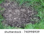 repairing lawn bare patch with... | Shutterstock . vector #740998939