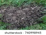 repairing lawn bare patch with... | Shutterstock . vector #740998945
