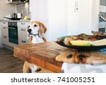 Small photo of Beagle try to filch fresh fried fish from table