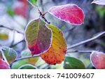 branches with yellowed dry... | Shutterstock . vector #741009607