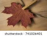 autumn | Shutterstock . vector #741026401