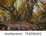 woodland path during autumn... | Shutterstock . vector #741036241