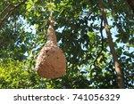 Huge Wasp's Nest.huge Wasp's...