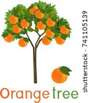 orange tree with green leaves ... | Shutterstock .eps vector #741105139