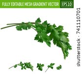 cilantro on white background.... | Shutterstock .eps vector #741110701