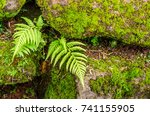 Small photo of Soft focus of Fern and mos grows and blooms on the stone.(naturally have to adapt to survive concept).