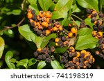 Plant Fungus Infestation....
