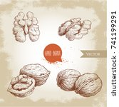 hand drawn sketch style walnuts ... | Shutterstock .eps vector #741199291