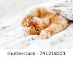 cute ginger cat lying in bed... | Shutterstock . vector #741218221
