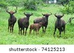 Wildebeast Family