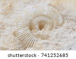Ammonites Fossil Texture As...