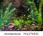fish in the aquarium | Shutterstock . vector #741274531