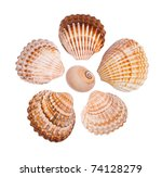 Six Common Cockle Shells...
