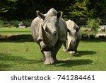 white rhinoceros in the... | Shutterstock . vector #741284461