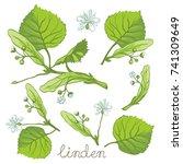 ink linden herbal illustration. ... | Shutterstock .eps vector #741309649