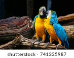 macaw bird are kissing | Shutterstock . vector #741325987