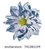 dahlia white blue flower  on an ... | Shutterstock . vector #741381199