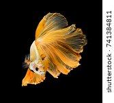 close up art movement of betta... | Shutterstock . vector #741384811
