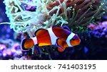 clownfish the most popular fish ... | Shutterstock . vector #741403195