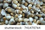 straw  mushroom. | Shutterstock . vector #741470764