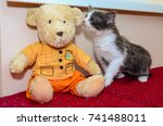 Kitten And Teddy Bear On A Red...