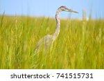 blue heron hiding in marsh... | Shutterstock . vector #741515731